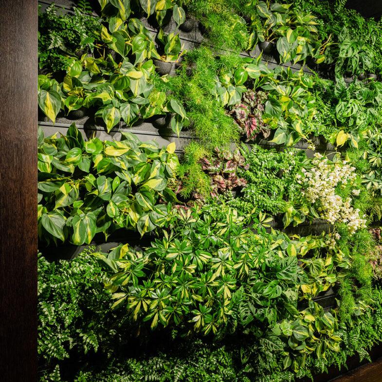 skansen båstad spa växtvägg